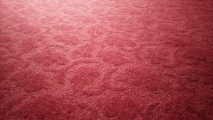 Best Ways To Prevent Carpet Mold